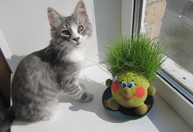 Фото инструкция травянчика